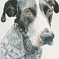 Pet Portrait Dog Art Print Hire Commission Pet Portrait Artist by Diane Jorstad