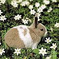 Pet Rabbit by Hans Reinhard/Okapia