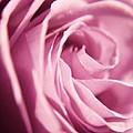 Petal Folds by Robin Lynne Schwind