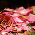 Petals 2 by Steve Ball