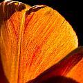 Petals And Sun by Gaurav Singh