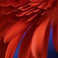 Petals by Connie Handscomb