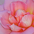 Petals by Dave Mills