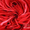 Petals by Deborah Benbrook