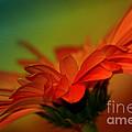 Petals by Deena Otterstetter
