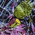 Petals by Edward Shmunes