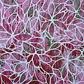 Petals In Pink by Elizabeth Langreiter