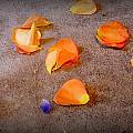 Petals by Olga Breslav