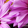 Petals by Rick Kuperberg Sr