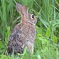 Peter Rabbit by Bonfire Photography