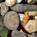 Petoskey Stones Ll by Michelle Calkins