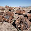 Petrified Forest by Adam Hart-davis