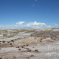 Petrified Forest by Susan Herber