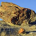 Petrified Log by Bob Phillips