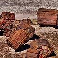 Petrified Wood by Dan Sproul