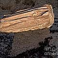 Petrified Wood On A Pedestal by Vivian Christopher