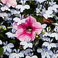 Petunia And Friends by Dennis Coates