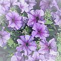 Petunia Patch by Ann Horn