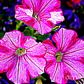 Petunia Rhapsody by Dora Sofia Caputo Photographic Design and Fine Art