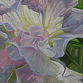 Petunia by Sherri Anderson