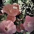 Petunias by Tim Nyberg
