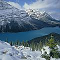 1m3639-peyto Lake After Snowfall,canadian Rockies by Ed  Cooper Photography
