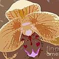 Phalaenopsis Synopsis by Barbie Corbett-Newmin