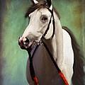 Phantom Lover Race Horce Before The Race by Angela Stanton