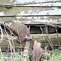 Phil The Liar by Bonfire Photography