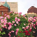 Philly Roses by Alice Gipson