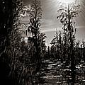 Phinizy Swamp by Jessica Brawley