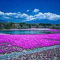 Phlox And Mt. Fuji by Jonah Anderson