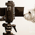 Pho Dog Grapher by Edward Fielding