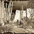 Phoenix Botanical Garden Path by Georgianne Giese