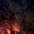 Phoenix One by Randal Bruck