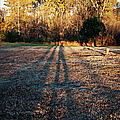 Photographer Shadow by Paulette B Wright