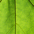 Photosynthesis - Featured 3 by Alexander Senin