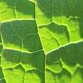Photosynthesis  by Robert Phelan
