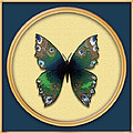 Phthalo Butterfly by Deborah Runham