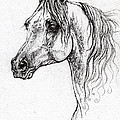Piaff Polish Arabian Horse Drawing 1 by Angel Ciesniarska