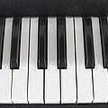 Piano Keys Digital Artwork by Sharon Talson
