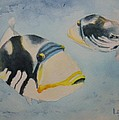 Picasso Triggerfish by Lisa Pope