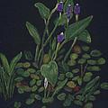 Pickerel Weed by Linda Feinberg