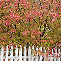 Picket Fence Fall by Alan L Graham