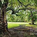 Picnic At The Park by Joan McCool