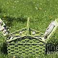 Picnic Basket by Mats Silvan