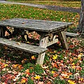 Picnic Table In Autumn by Louise Heusinkveld