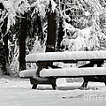 Picnic Table In The Snow by Rose Santuci-Sofranko