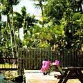 Picnic Under The Palms by Florene Welebny