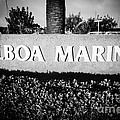 Pictue Of Balboa Marina Sign In Newport Beach by Paul Velgos